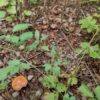 落葉キノコの森